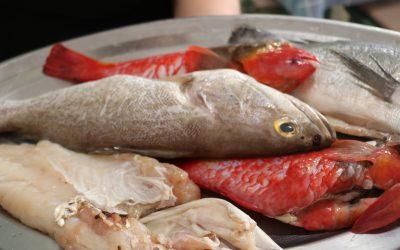 Pesca artesanal, la nueva marca de producto local