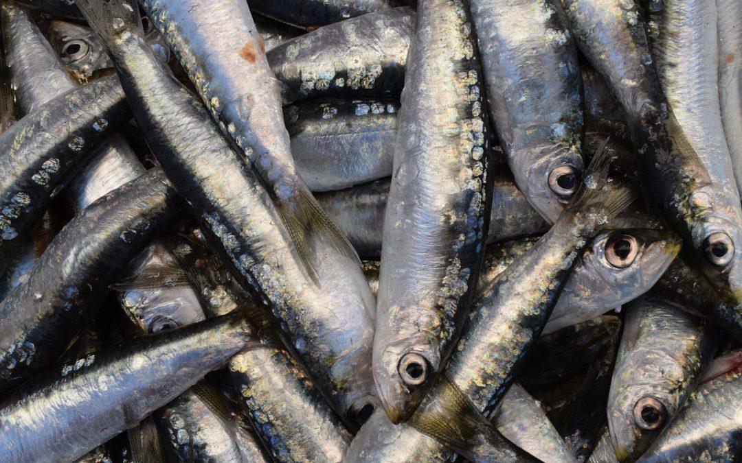 Sardinas, un pescado azul con demasiada versatilidad