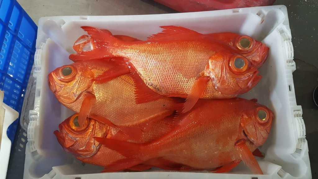 Pescado canario, ¿cuánto lo valoramos realmente?